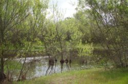 Madrona Marsh, a natural wetland thrives next to Sepulveda Blvd. in Torrance (Photo by South Bay Events).