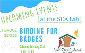 Scout Badge Series At The SEA Lab – Birding For Badges